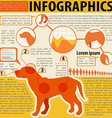 An infographics of a dog vector image vector image