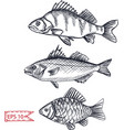 sketch - fish hand drawn vector image