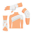 elastic medical bandage set body parts vector image