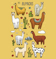 set of cute alpaca llamas or wild guanaco on the vector image vector image