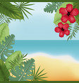 beauty beach hibiscus palm island vector image