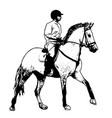 equestrian sketch vector image vector image