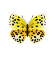 lycaena butterfly yellow vector image vector image