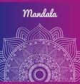 beautiful mandala design vector image
