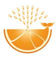 citrus orange icon flat orange - whale produces vector image vector image