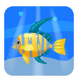 cute beautiful yellow tropical fish on sea vector image