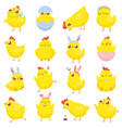 easter chicks spring baby chicken cute yellow vector image