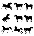 Horses Galloping and Standing Silhouette detailed vector image vector image
