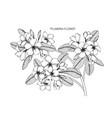 plumeria flower and leaf hand drawn botanical vector image vector image