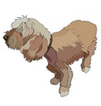 shaggy dog vector image