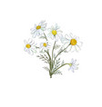 a bouquet field daisies isolated against vector image vector image