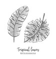 engraved tropical with leaves vector image