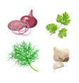 onion garlic set vector image vector image