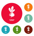 turnip icons circle set vector image