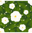 white camellia flower on ivory beige background vector image