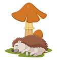 cartoon little hedgehog sleeps under mushroom vector image vector image
