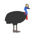 casuarius bird vector image