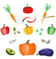 collection of vegetables ond herbs vector image