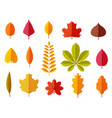fall leaves colorful autumn leaves leaf chestnut vector image vector image