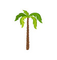 palm tree with big bright green leaves and brown vector image vector image