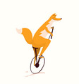 red fox cycling riding bicycle funny nursery vector image