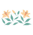 simple lily flowers buds and leaves set vector image
