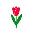 tulip icon bright colors vector image