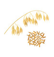 oat ears of grain and bran golden spike and corn vector image