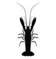 graphic lobster on white background vector image vector image
