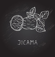 hand drawn jicama vector image