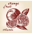 fruit orange set hand drawn llustration vector image vector image