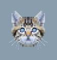 pixel siberian cat face vector image