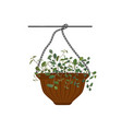 pot hanging with potted flowers tradescantia vector image vector image