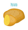 potato organic food cartoon flat style vector image vector image