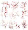 vein set human vessel eye veins vector image
