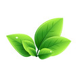eco green leaves abstract ecology vector image vector image