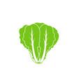 romaine lettuce vector image vector image