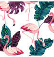 tropical flamingos cartoon vector image