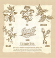 vintage culinary herbs information poster design vector image vector image