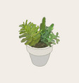 indoor plants in pots vector image