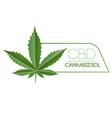 CBD Marijuana Plant Leaf vector image