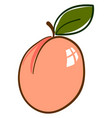 delicious apricot on white background vector image vector image