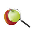 red green apple vector image
