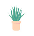 aloe vera in pot houseplant for interior vector image vector image