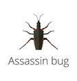 assassin bug insect