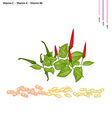 Chili Peppers with Vitamin C A and B6 vector image vector image