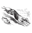 English Greyhound vintage engraving vector image