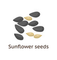 the fruit of the plant is a hard-shelled nut with vector image vector image