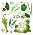 set of ripe green vegetables vector image