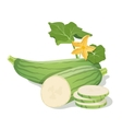 Marrow vegetables vector image